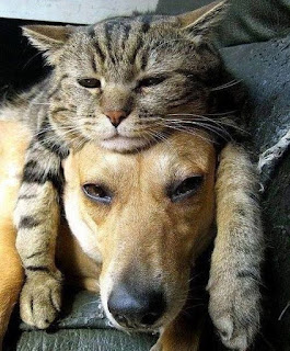 funny cat and dog i've got my thinking can on
