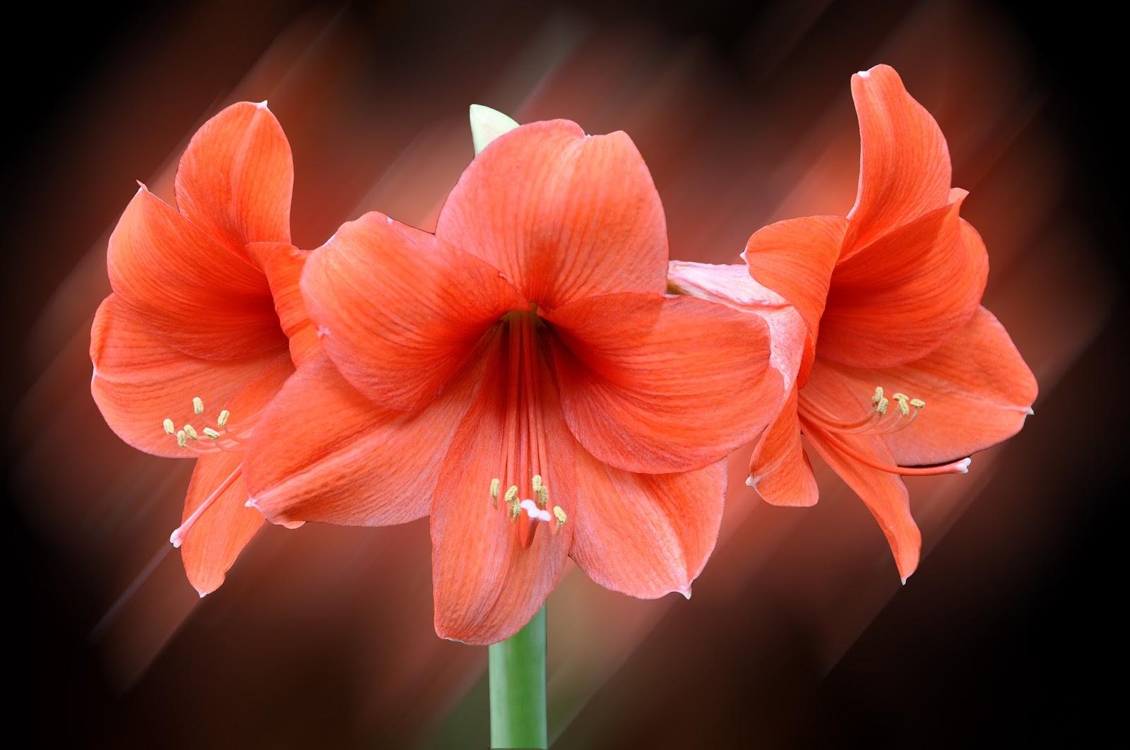 Banco de im genes para ver disfrutar y compartir las - Fotos flores bellas ...