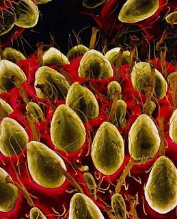 foto hasil mikroskop