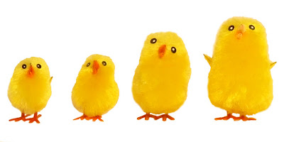 Easter chicks