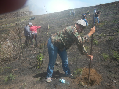 reforestation volunteer