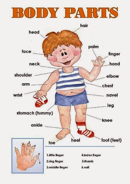 APRENDER en FAMILIA: Las partes del cuerpo humano en español e inglés