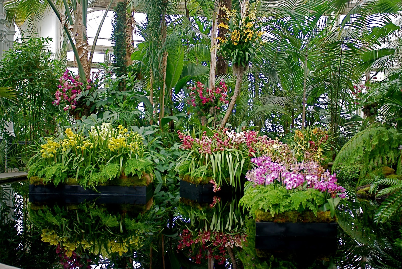 Nyc Nyc 11th Annual Orchid Show Opens At The New York Botanical Garden In The Bronx