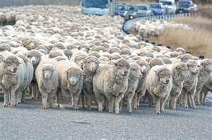 """<img src=""""animal_herd.jgp"""" alt=""""Picture of Animal Herd""""/>"""