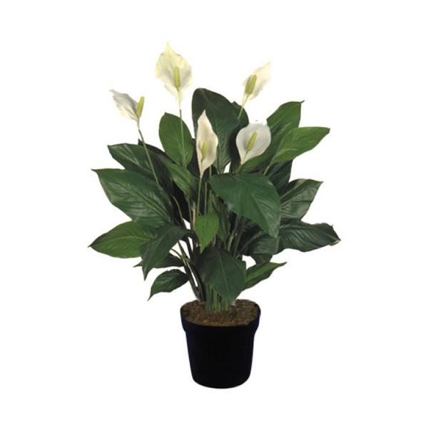 Una casa sana plantas purificadoras 1 espatifilo for Plantas de interior limpian aire