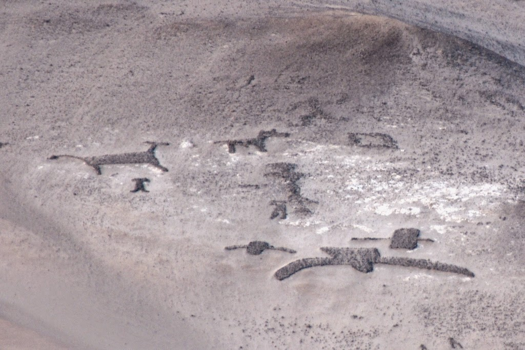Geoglyphs Arica birds dogs