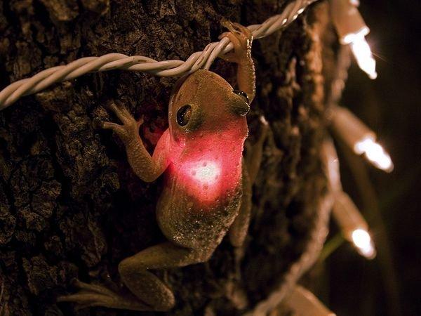 I Spy Animals: Christmas Lights Up a Tree Frog