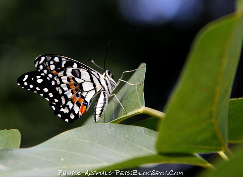 http://4.bp.blogspot.com/-_xL9q6H1Stg/TtsyfkZMy_I/AAAAAAAACVo/uWgd_3MpTZY/s1600/butterfly%2Bphoto.jpg
