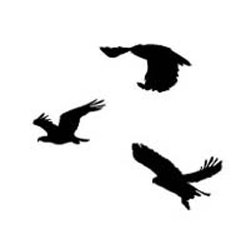 Ode to tris dauntless shirt and divergent stencils rae for Divergent tris bird tattoo