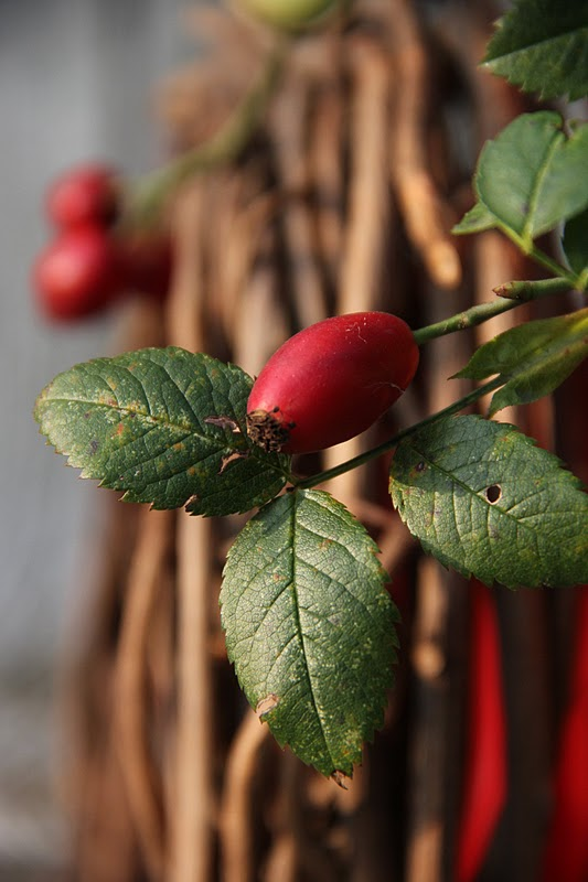 Molly Herbstdeko in rot