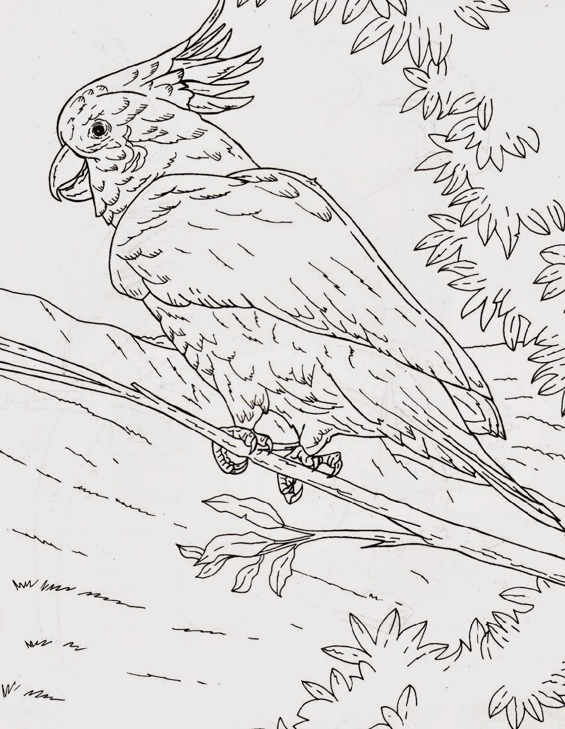 Gambar Mewarnai Burung Kakak Tua