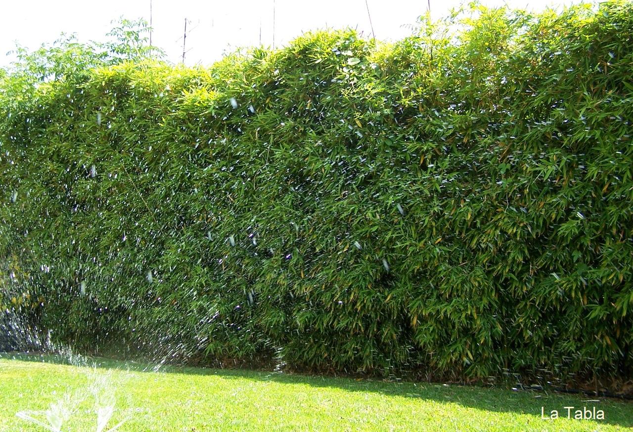 Bamb en el jard n y no digo m s - Jardin de bambu talavera ...