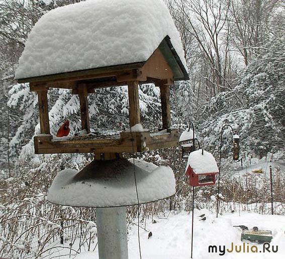 Садовые кормушки для птиц