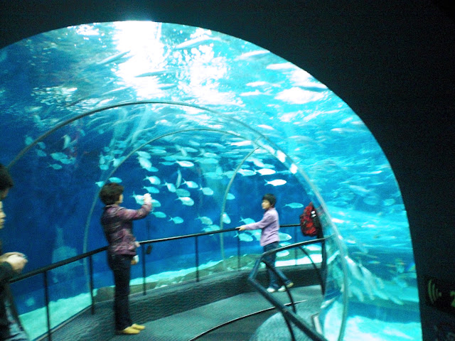 Excuse My French Made In China Shanghai Ocean Aquarium And Insect Kingdom