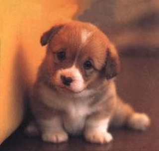 Pictures Puppies on Pictures   Puppies Pictures   Puppies Pictures Cute   Cute Puppies