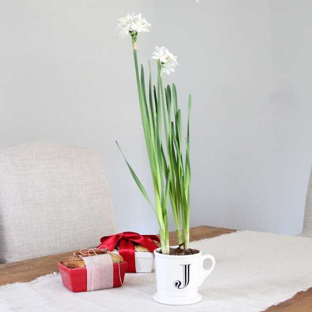 potted paperwhites | easy holiday hostess gift