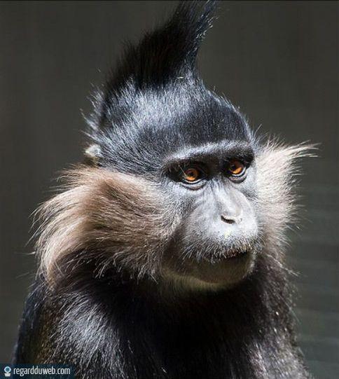 Images drôles et étonnantes Animal - Singe v146 - Des milliers de photos drôles et insolites