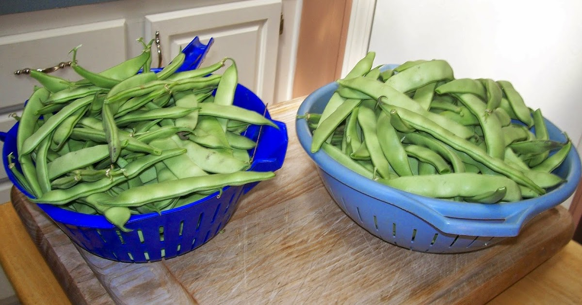 how to cook garden picked green beans