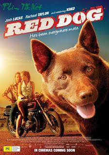 Chú Chó Đỏ - Red Dog - Chú Chó Đỏ