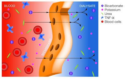 Principos físicos de la depuración de moléculas