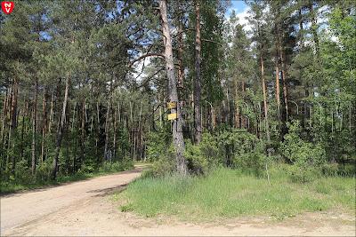 Поворот на Ливье. Реклама на деревьях