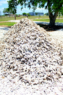 oysters matagorda texas