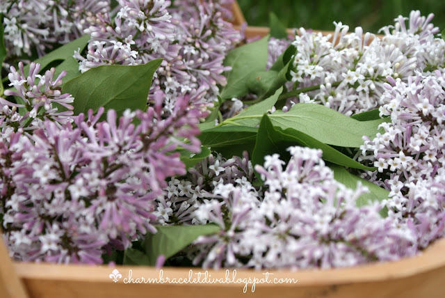 freshly picked lilacs