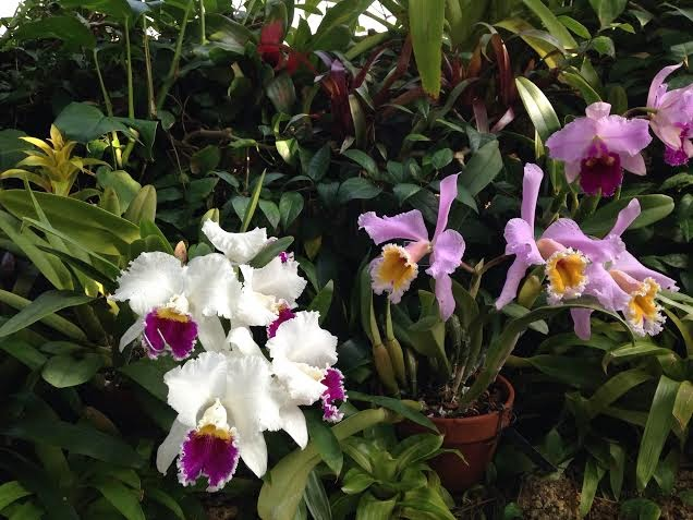 The Beauty Of Phipps Conservatory Spring Flower Show Part I