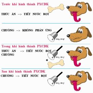 Phản xạ có điều kiện ở chó