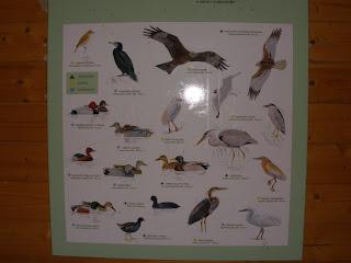 aves zona Balsa del Carrasco