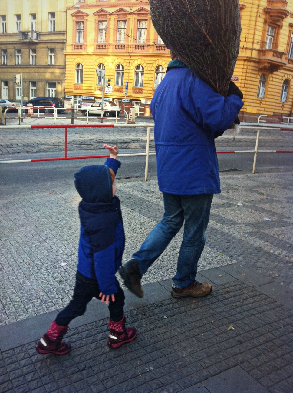 carrying the Christmas tree home, Prague, Czech Republic