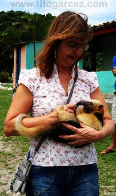 Momento de interação de visitante com Tamanduá-mirim no Parque dos Falcões, em Sergipe