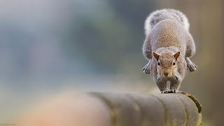 Squirrel Wallpaper