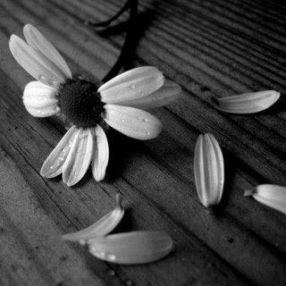 Él me prometió cosas... no con palabras, sino con sueños