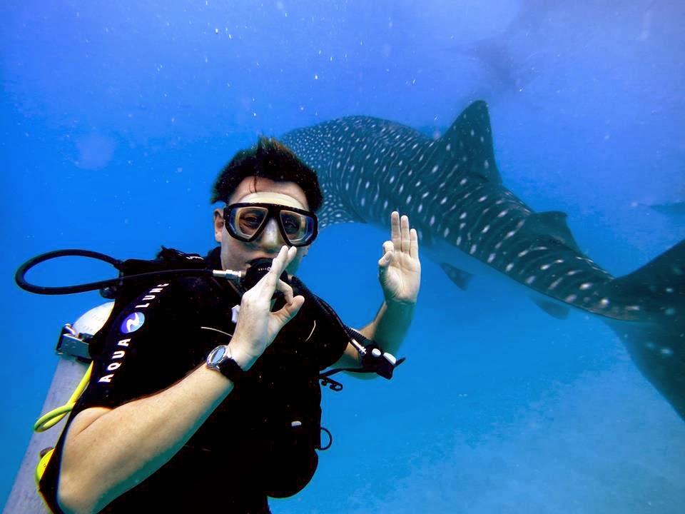 dive point alcoy best resort near oslob whale shark watching