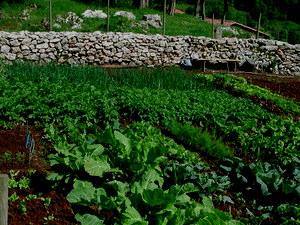 Crea tu jard n productividad en la agricultura ecol gica for Crea tu jardin