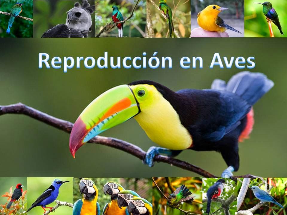Reproducción en Aves   ENIGMAS DE LA VIDA
