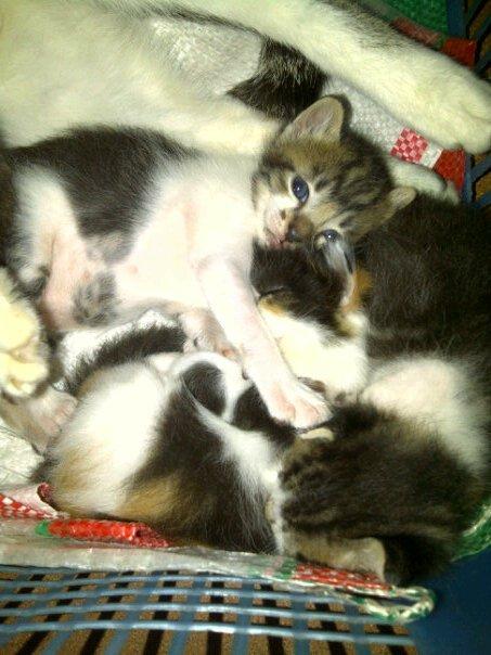 Lovecat Cat Food