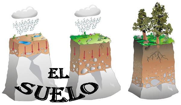 La tierra y sus contaminantes for El suelo y sus capas