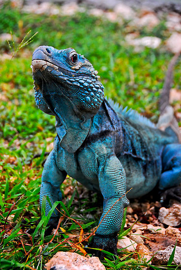 Foto : zonaair.blogspot.com