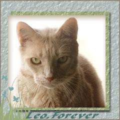 Leo  RIP