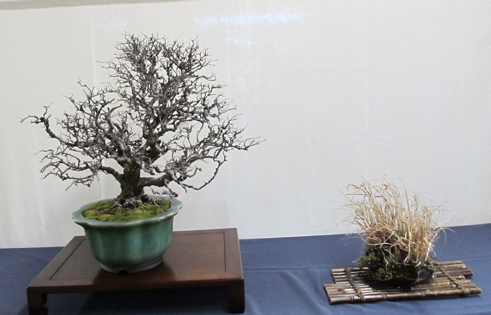 Bonsaibp39s Bonsai Blog Bare Naked Trees 2013