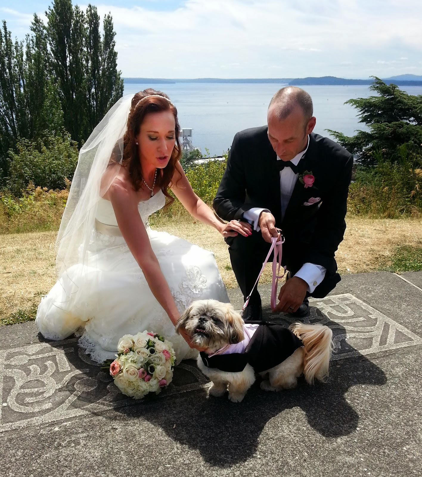 Chewie is obviously a loved wedding dog - Patricia Stimac, Seattle Wedding Officiant