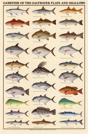 Understanding food classification of fish and shellfish for Game and fish