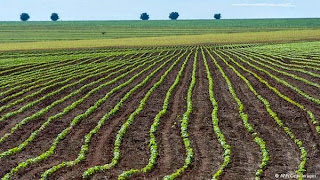 Perkebunan kacang kedelai di Brasil