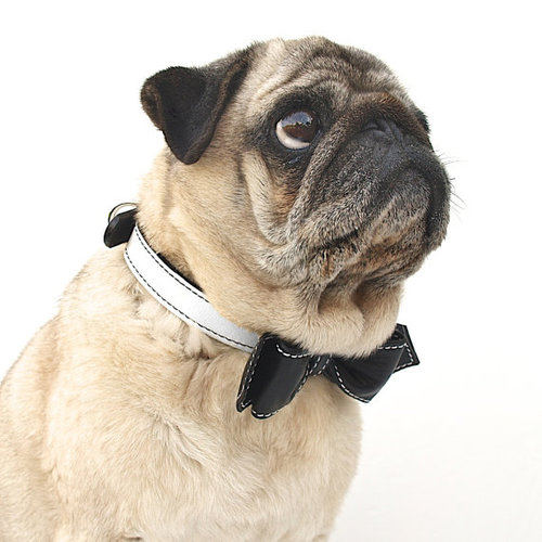 Pug Dog HD Wallpapers Free Download