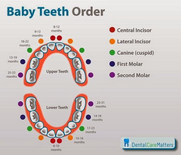 Baby Teeth Order