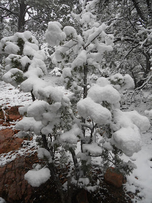 juniper winter snow