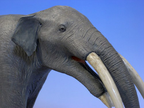 Gomphotherium Angustidens Gomphotherium
