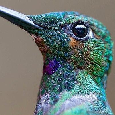 اروع مايمكن ان تشاهده من صور الطيور  طيور3